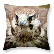 Bird Of Prey Flying Throw Pillow