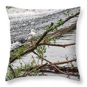 Bird On A Weir Throw Pillow