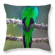 Bird Perching On A Branch, Savegre Throw Pillow