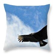 Bird The Black Vulture Throw Pillow