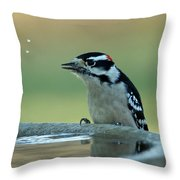 Birdbath Funtime Throw Pillow