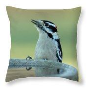 Birdbath Throw Pillow