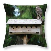 Birdhouse Takeover  Throw Pillow