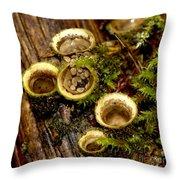 Birds Nest Fungi Throw Pillow