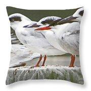Birds On A Ledge Throw Pillow