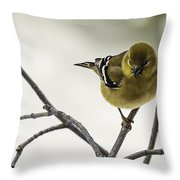 Birdy Birdy Goldfinch Throw Pillow
