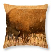Bison At The Elk Ranch In Grand Teton National Park Throw Pillow