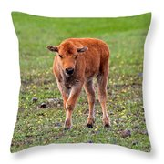 Bison Calf In The Flowers Yellowstone National Park Throw Pillow