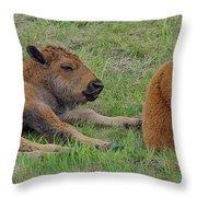 Bison Calves  Throw Pillow