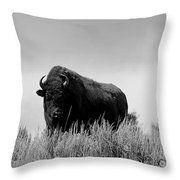 Bison Cow On An Overlook In Yellowstone National Park Black And White Throw Pillow