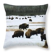 Bison Cows Browsing Throw Pillow