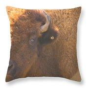Bison Evening Throw Pillow