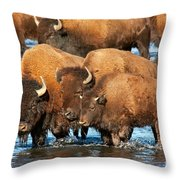 Bison Family In The Lamar River In Yellowstone National Park Throw Pillow