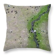 Bison In The Lamar Throw Pillow