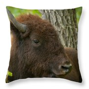 Bison Resting Throw Pillow