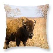 Bison Tall Grass Throw Pillow