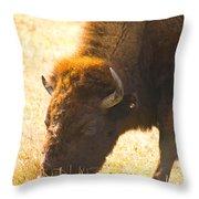 Bison Wander Throw Pillow