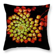 Bits N Pieces Waterlily Throw Pillow