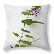 Bittersweet Nightshade Throw Pillow