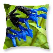Black And Blue Salvia Throw Pillow