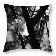 Black And White Appleblossom Throw Pillow