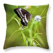 Black And White Butterfly V3 Throw Pillow