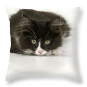 Black-and-white Cat Throw Pillow