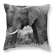 Black And White Elephant Throw Pillow
