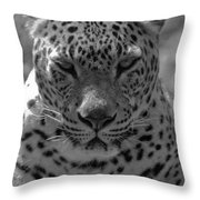 Black And White Leopard Portrait  Throw Pillow