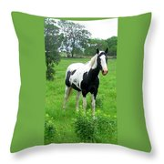 Black And White Paint Horse Throw Pillow