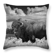 Black And White Photograph Of An American Buffalo Throw Pillow