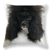 Black And White Poodle Throw Pillow