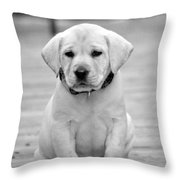 Black And White Puppy Throw Pillow