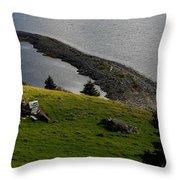 Black And White Sheep - Romeo The Ram Throw Pillow