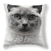 Black And White Siamese Cat Throw Pillow