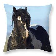 Black And White Stallion Comes Close Throw Pillow