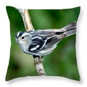 Black-and-white Warbler Mniotilta Varia Throw Pillow