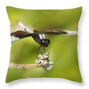 Black And White Widow Skimmer Throw Pillow