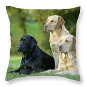 Black And Yellow Labrador Retrievers Throw Pillow