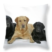 Black And Yellow Labradors With Puppy Throw Pillow