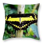 Black And Yellow Swallowtail Butterfly Throw Pillow
