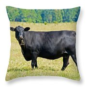 Black Angus Cattle Throw Pillow