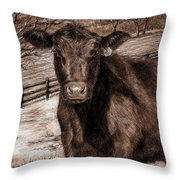 Black Angus In The Field Throw Pillow