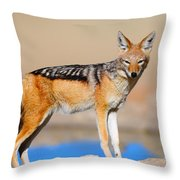 Black-backed Jackal Throw Pillow