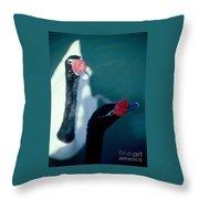 Black Beaked Swans Throw Pillow