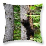 Black Bear Cub Climbing A Pine Tree Throw Pillow