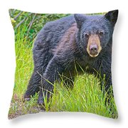 Black Bear Cub Near Road In Grand Teton National Park-wyoming Throw Pillow