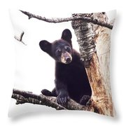 Black Bear Cub Up In A Dead Tree In Northern Minnesota Throw Pillow