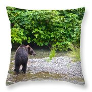 Black Bear Eating A Salmon In Fish Creek In Tongass National Forest-ak Throw Pillow