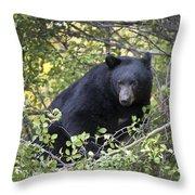 Black Bear II Throw Pillow